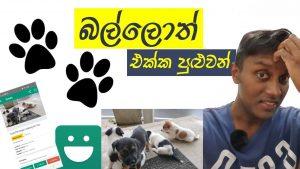 බල්ලොත් එක්ක පුළුවන් – ikman pet selling Sri Lanka 🐶